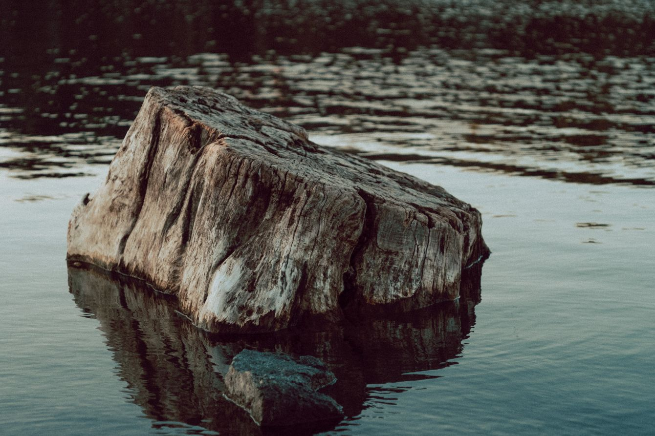 Click thumbnail to see details about photo - A Tree Stump At The Cuts in New Brunswick