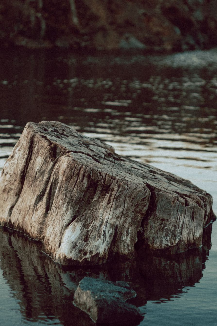 Click thumbnail to see details about photo - A Tree Stump at The Cuts