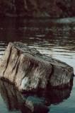 A Tree Stump at The Cuts