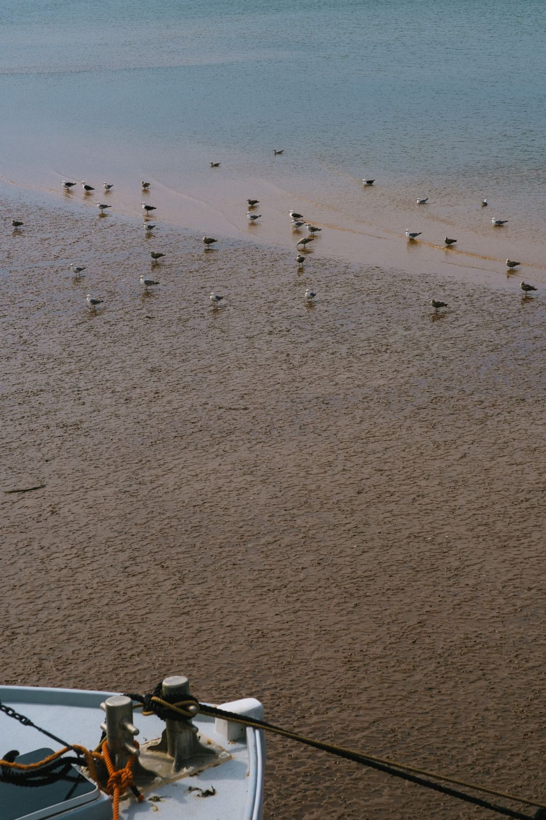 A photo depicting Birds during Low Tide