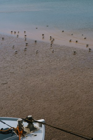 A photo of Birds during Low Tide
