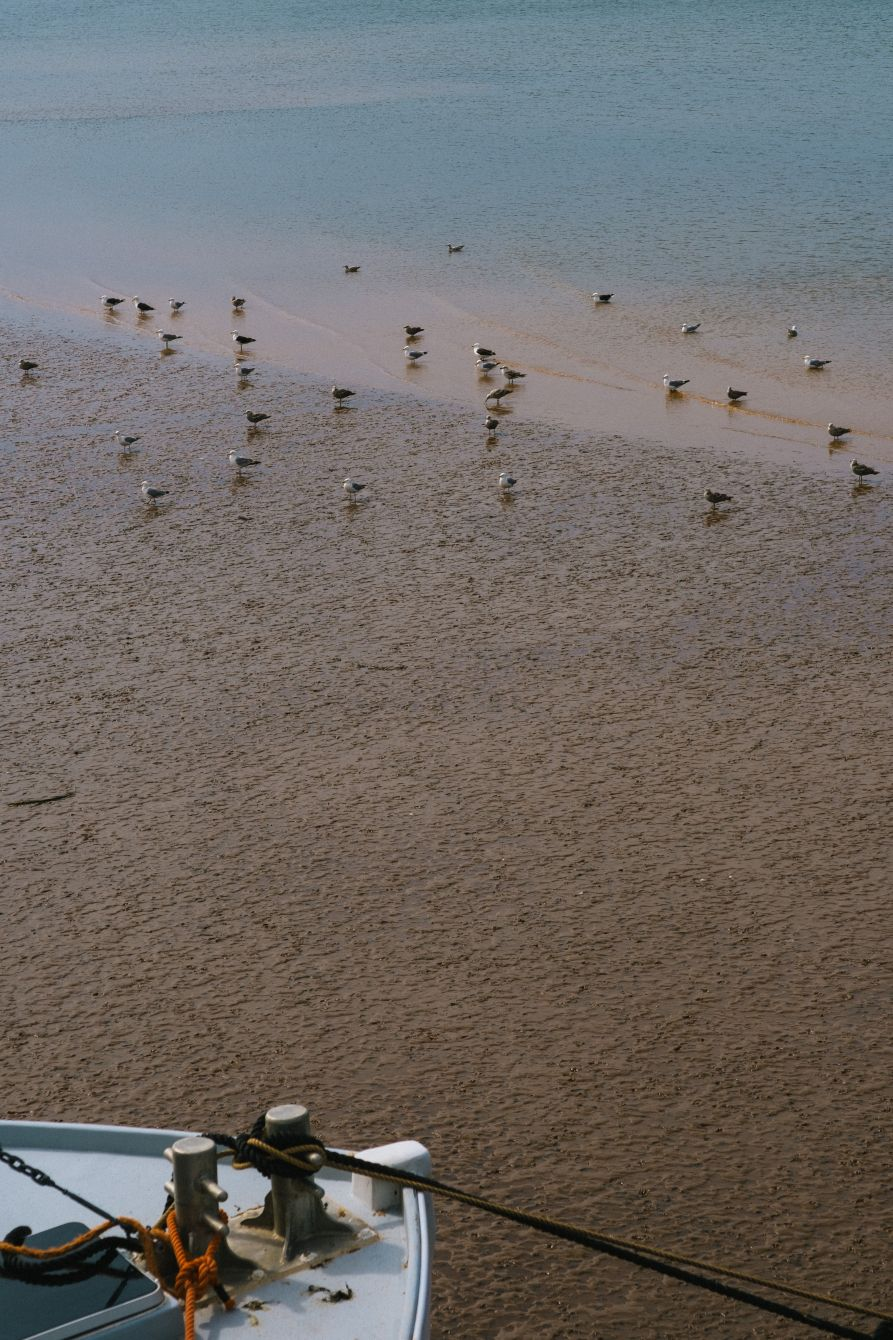 Click thumbnail to see details about photo - Birds during Low Tide