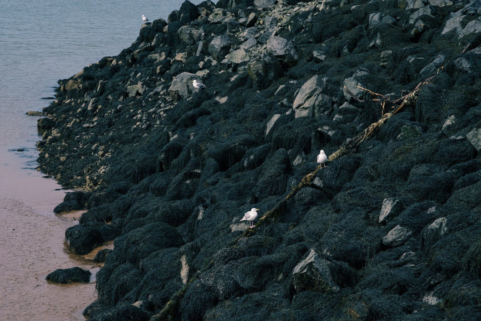 A photo of Birds on Rocks at Pier
