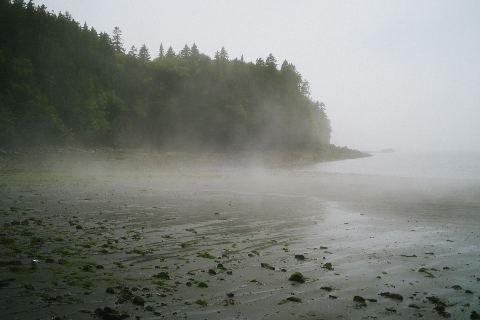 A photo depicting Rolling Fog Black Beach