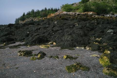 A photo of Seaweed Covering Rocks at Black Beach