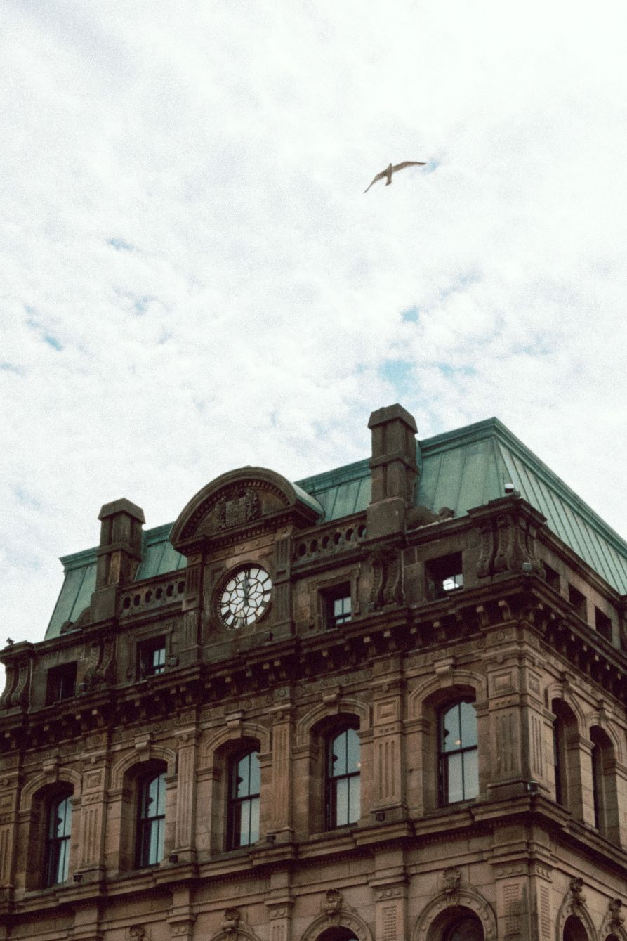 Click thumbnail to see details about photo - Bird Flying Over Building on Prince William 1