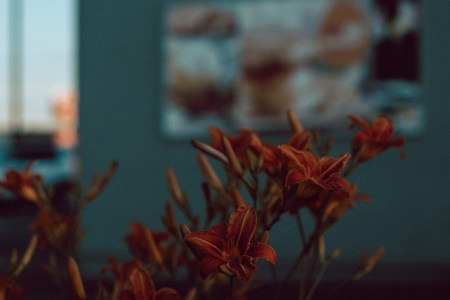 A photo of Urban Flowers Closeup