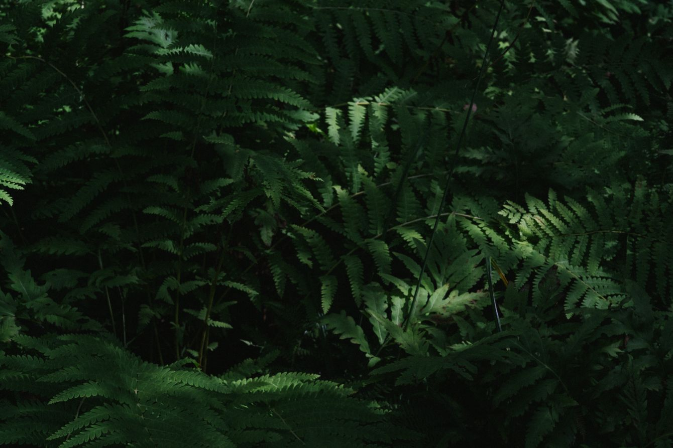 Click thumbnail to see details about photo - Green Fern Variation