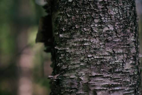 A photo of Tree Bark Texture With Background