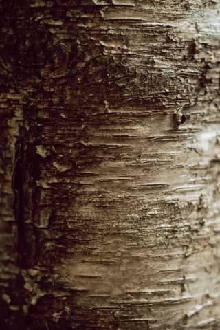 A photo of Tree Bark Texture