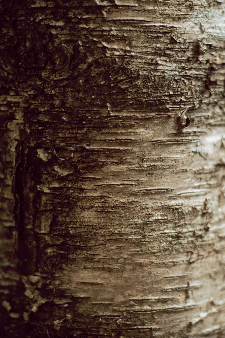 Click thumbnail to see details about photo - Tree Bark Texture