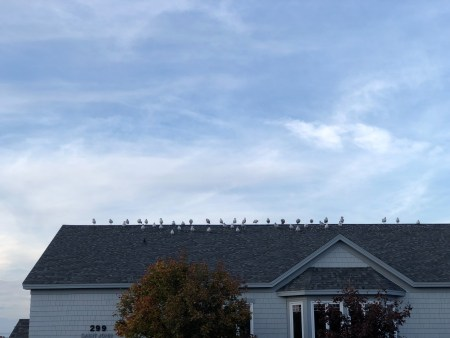 A photo of Birds 18 1
