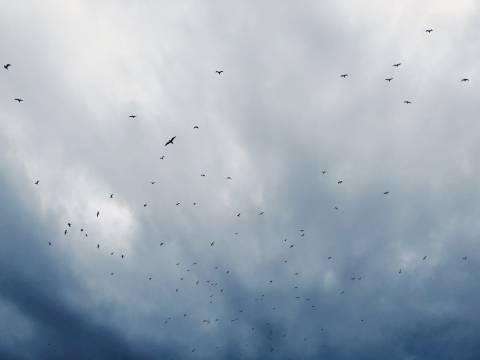 A photo of Birds 20 1