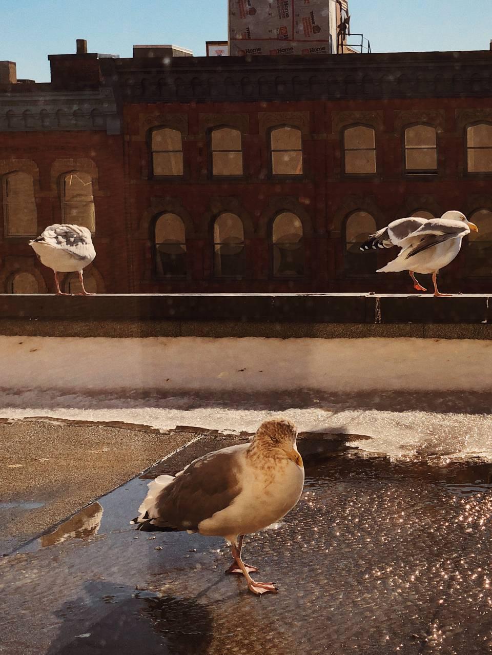 A photo of Birds 29 1