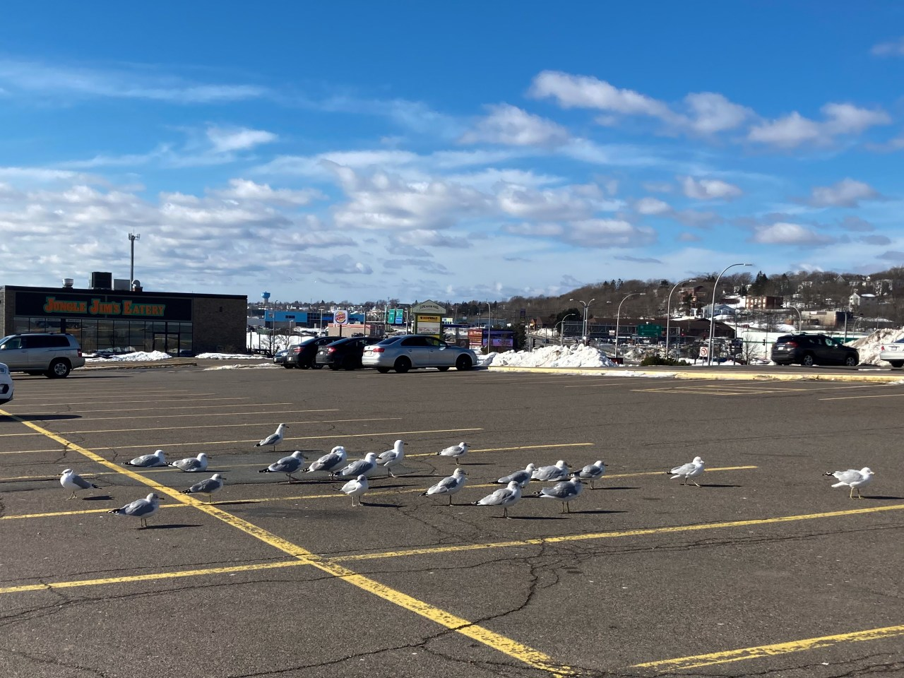 A photo of seagulls in parking lot west side