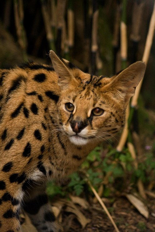 Small_Cats_0018