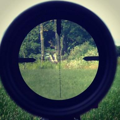 600 Yards Through Optics