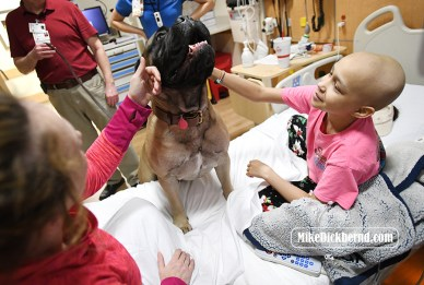 Gus the therapy dog