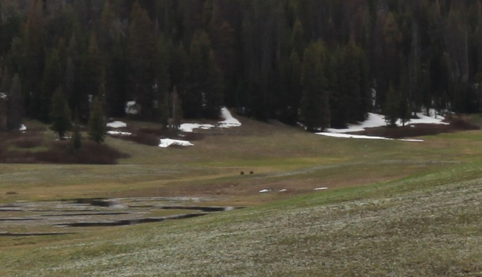 A little closer image of two Grizzly bears. Just North of Togwotee Pass, WY (Another high-zoom image from Paul is on the way.)