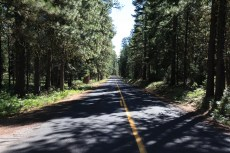The semi-arid landscape of yesterday is gone as everything gets all PacWestish. --Willamette National Forest, OR.