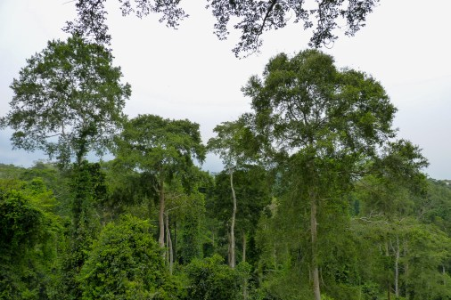 View from the canopy walkway at Kakum