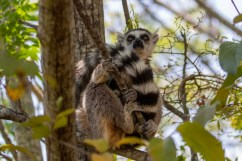 Southern Madagascar-004