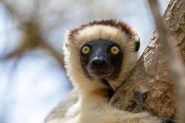 Southern Madagascar-028