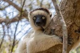 Southern Madagascar-029