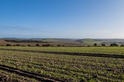 A beautiful late afternoon, looking towards Worthing from the South Downs Way