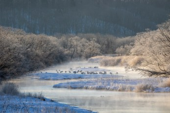 We start before sunrise with the temperature at -14°C for some atmospheric shots of Red-crowned Crane