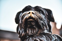 Greyfriars Bobby Monument. Touching his nose is good luck. The constant nose rubs reveal the original color of the monument.