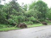 Across the street from Hannah and Michael's house on Cretin Ave S - morning of Saturday 22 June