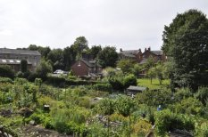 The allotments below Vale Terrace.