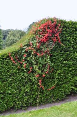 20140702 035 Wightwick Manor & Gardens