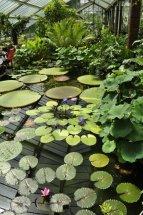 20140709080 Kew Gardens