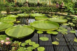 20140709160 Kew Gardens