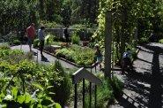 The Herb Garden (4)
