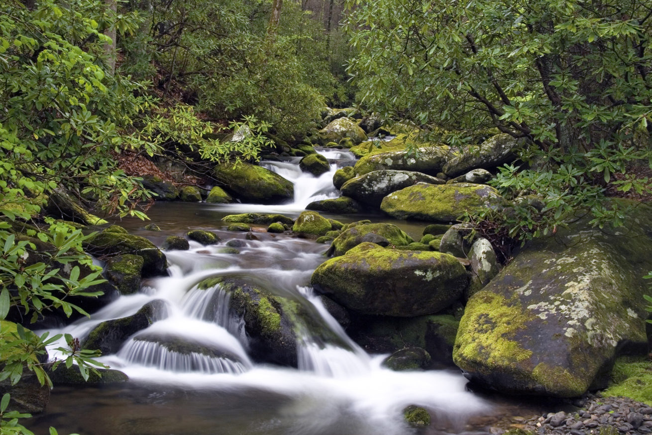 Fall Smoky Mountains Wallpaper Smoky Mountain Wildflowers Waterfalls And More Mike