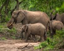 **Elephant.Natal.CNV_2054