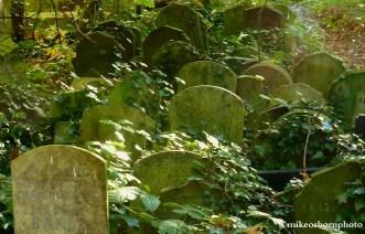 Tombstones in ivy