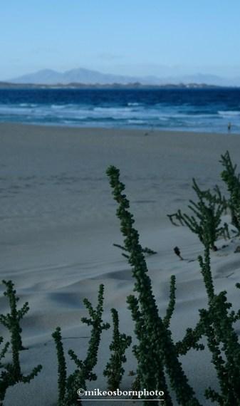 The distant sea