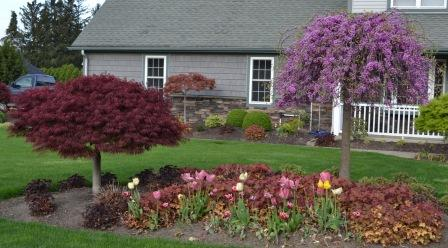 landscaping ideas. plant