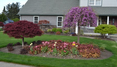Landscaping Ideas What Plant Goes Where In The Landscape?