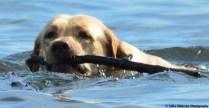 Delaware-River-good-dog-Bristol-02