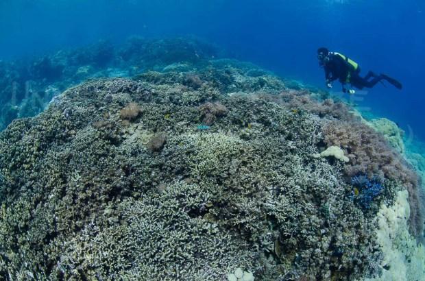 Coral Gardens, Menjangan, Bali