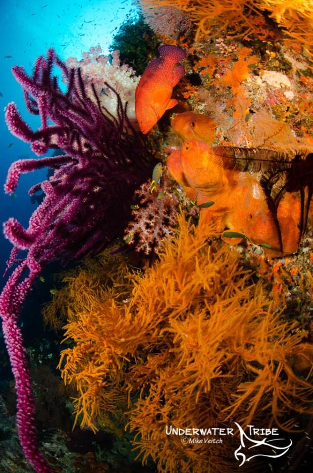 Soft Corals and Grouper Andiamo