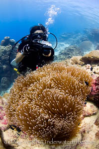 Photographer and Magnificent Anemone Bali