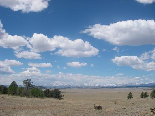 Montane grassland