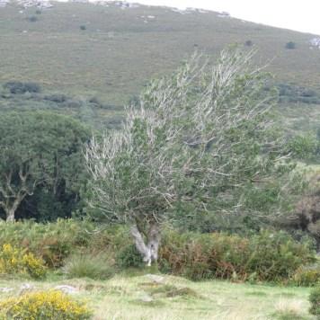 A brave tree