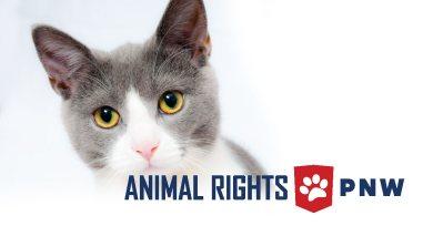 ANIMAL RIGHTS PNW Social Media Post header
